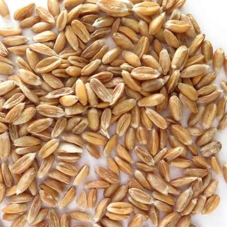 Granos de trigo de espelta ecológica - 1 kg