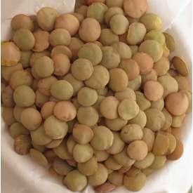 Lenteja castellana ecológica - 500 g